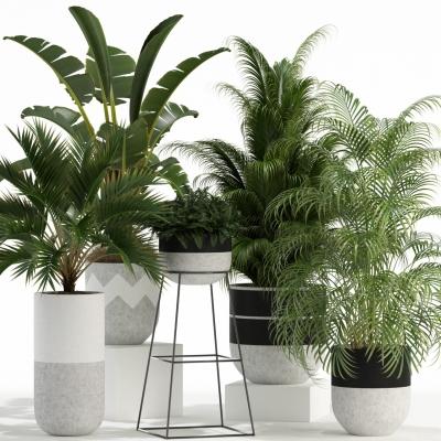 现代绿植盆栽组合3D模型【ID:328439803】