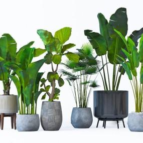 現代綠植盆栽3d模型【ID:247041804】