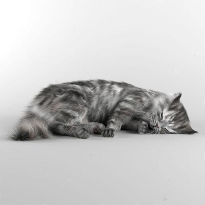 猫3D模型【ID:67165001】