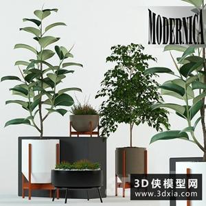 室內植物組合國外3D模型【ID:229459782】
