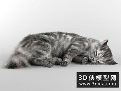 小貓模型國外3D模型【ID:329426006】