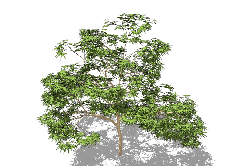 3D植物樹SU模型【ID:136401629】