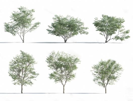 现代树3D模型【ID:324891630】