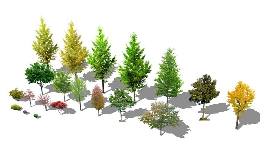 2D植物树组合SU模型【ID:136401693】