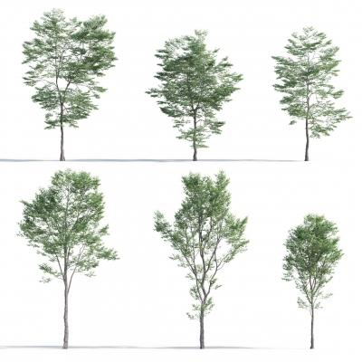 现代树木组合3D模型【ID:327789683】