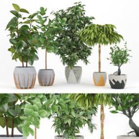 现代植物盆栽组合3D模型【ID:327786878】
