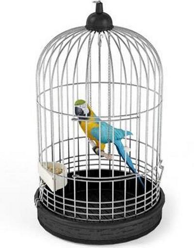 鸟3D模型【ID:715077378】
