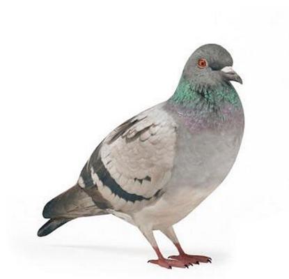 鸟3D模型【ID:715077380】