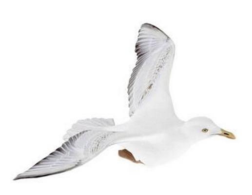 白色鸟3D模型【ID:715077393】