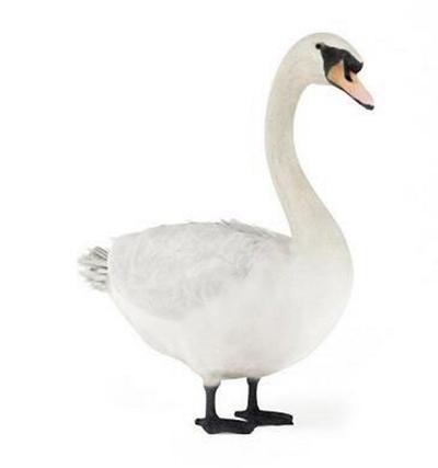 白色鸟3D模型【ID:715077394】