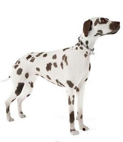 狗3D模型【ID:715078715】
