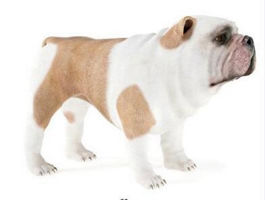 狗3D模型【ID:715078724】