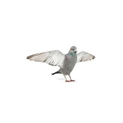 灰色鸟3D模型【ID:715272371】