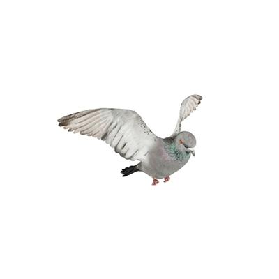 灰色鸟3D模型【ID:715272377】