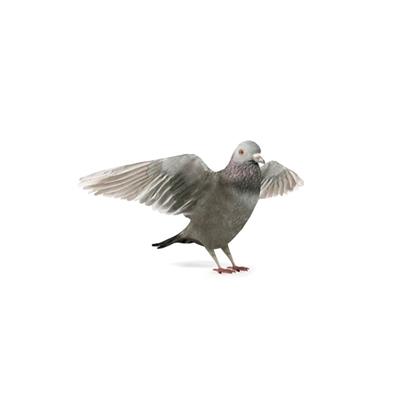灰色鸟3D模型【ID:715272386】