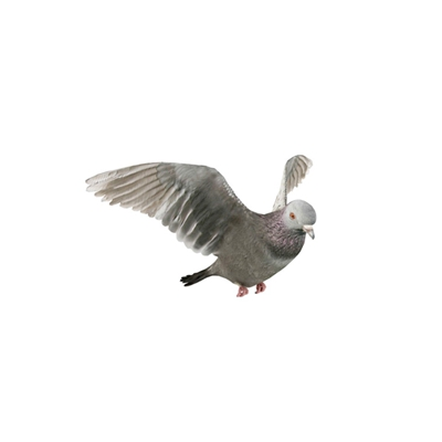 灰色鸟3D模型【ID:715272388】