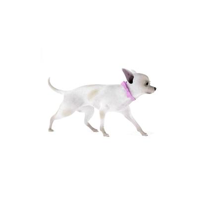 白色狗3D模型【ID:715273761】