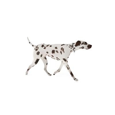 白色狗3D模型【ID:715273765】