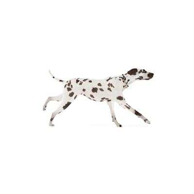白色狗3D模型【ID:715273768】