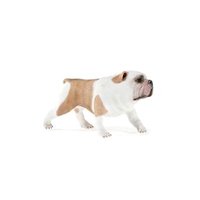 白色狗3D模型【ID:715273775】