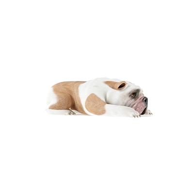 白色狗3D模型【ID:715273781】