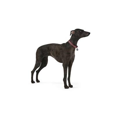 黑色狗3D模型【ID:715273783】