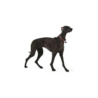 黑色狗3D模型【ID:715273785】