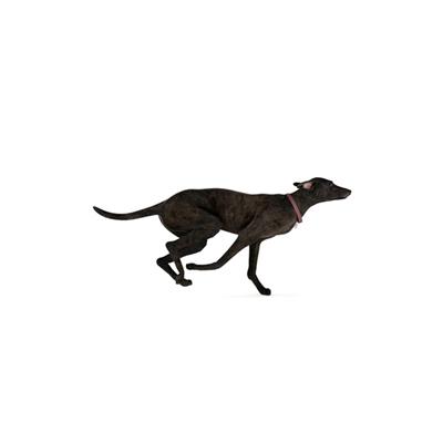 黑色狗3D模型【ID:715273788】