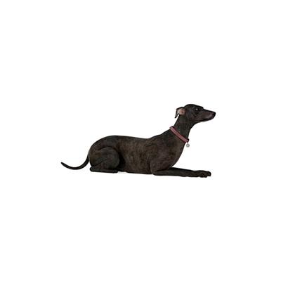 黑色狗3D模型【ID:715273790】