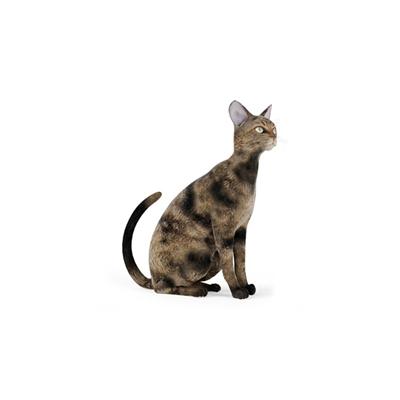 棕色猫3D模型【ID:715273896】