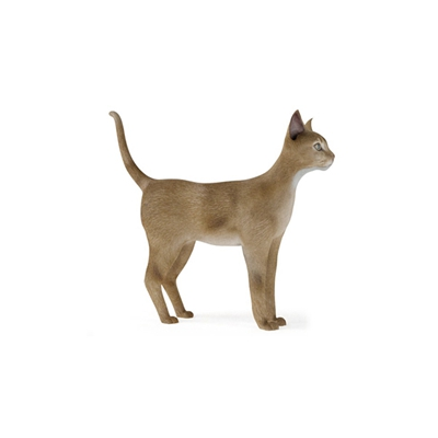 棕色猫3D模型【ID:715273897】
