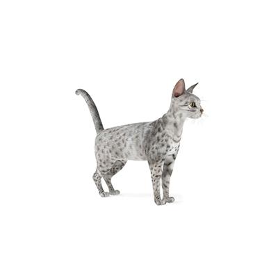 灰色猫3D模型【ID:715274827】