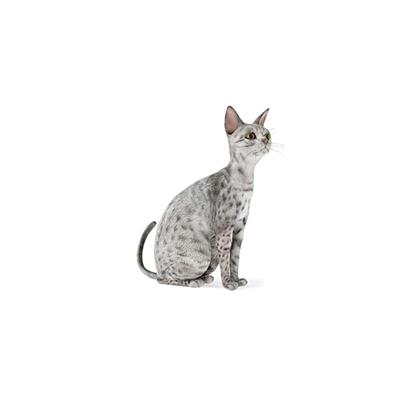 灰色猫3D模型【ID:715274831】