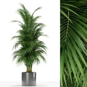 現代綠植盆栽3d模型【ID:248244883】