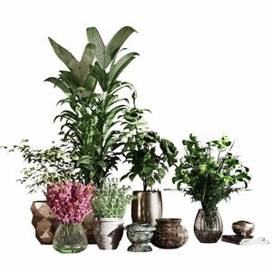 植物盆栽绿植组合3D模型【ID:241359849】