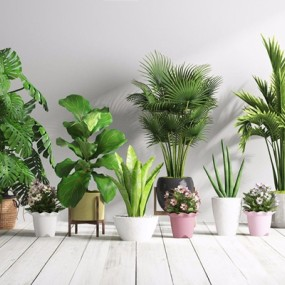 植物盆栽3D模型【ID:327928892】