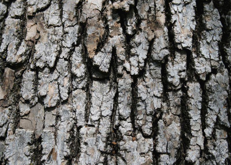木纹木材-树皮高清贴图【ID:236791332】