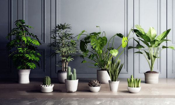 现代绿植盆栽3D模型【ID:245862816】