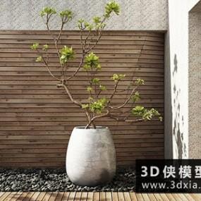 现代植物国外3D模型【ID:229436762】
