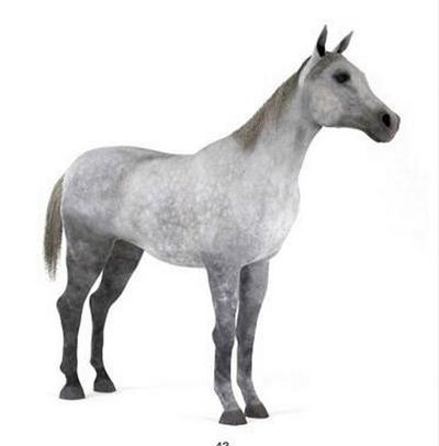马3D模型【ID:815078639】