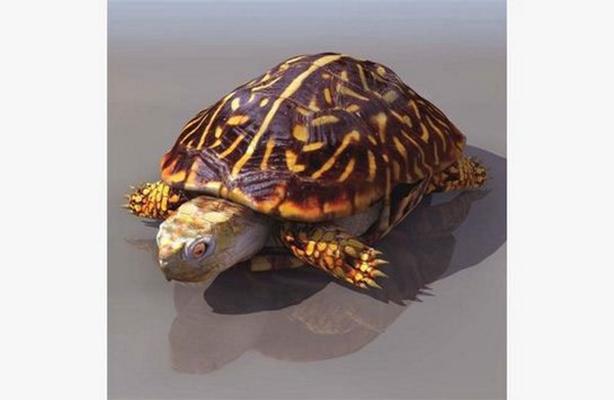 棕色乌龟3D模型【ID:815078752】