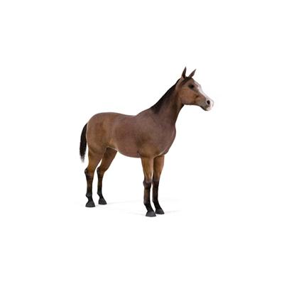 棕色马3D模型【ID:815273678】