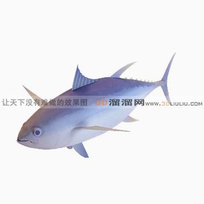 鱼33D模型【ID:817218899】
