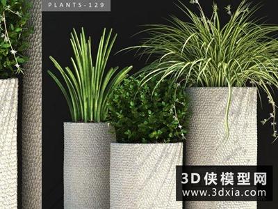 現代植物組合國外3D模型【ID:229403740】