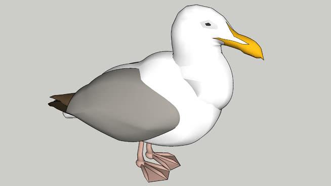 海鸥SU模型【ID:739981452】