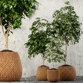 現代植物盆栽組合3D模型【ID:328434805】