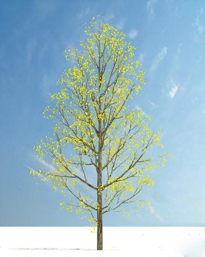 现代树3D模型【ID:320617689】