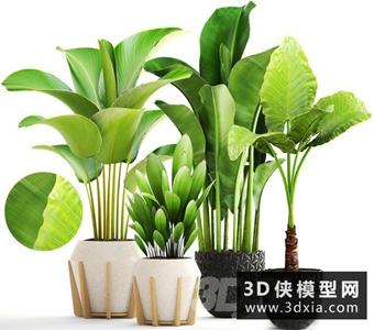 芭蕉葉子植物組合國外3D模型【ID:229460771】