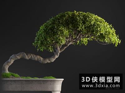 植物國外3D模型【ID:229814741】
