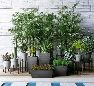 植物竹子花盆组合3D模型【ID:241356886】